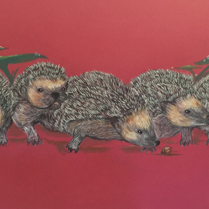 Hedgehogs - watercolour pencil