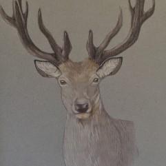 Deer - watercolour pencil