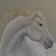 The Prince's Horse - watercolour pencil