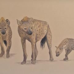 Hyenas - watercolour pencil