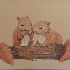 Squirrels in Love - watercolour Pencil