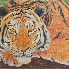 Tiger - watercolour pencil